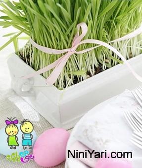 کاشت سبزه کنجد بهترین زمان کاشت سبزه برای عید آموزش کاشت سبزه عید با گندم ...
